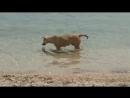 Беспризорных собака которая отдыхает на море