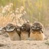 Sweet home alabama, owls, radio operator, vietnam