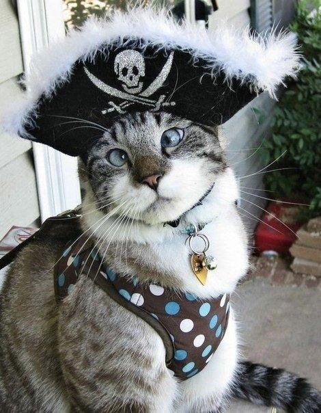 Самый милый косоглазый кот по кличке Спанглс