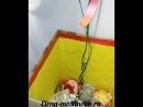 КОРОБКА - СЮРПРИЗ. С шариками , мишкой Тедди и сладкими подарками.