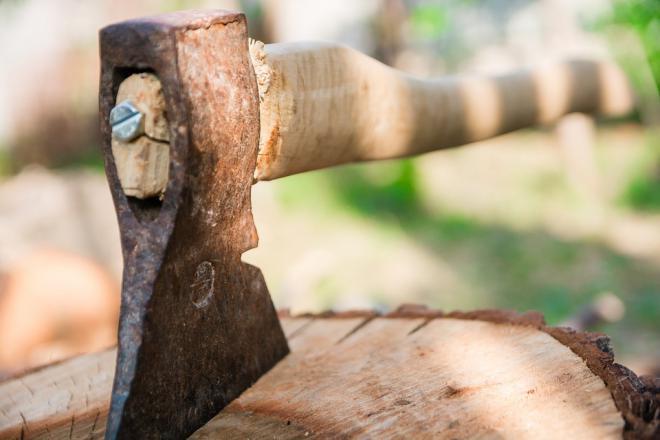 Мужчина из Прикубанского района осужден на 1 год за незаконную рубку дерева