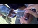 Капчагай - змееголов