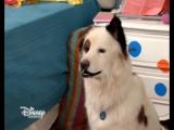 Собака точка ком 3 сезон 12 серия