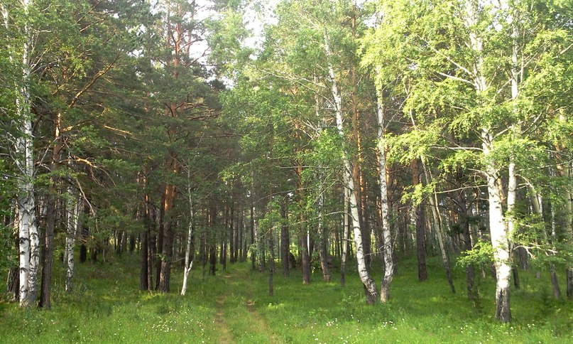 Живописный лес возле села Колывань