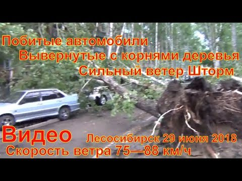 Последствия сильного ветра Лесосибирск машины побило шифером Деревья вывернуло с корнями буря ураган