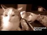 Где Детонатор? Кот и Попугай и Бетмен