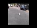 Aerobic cat