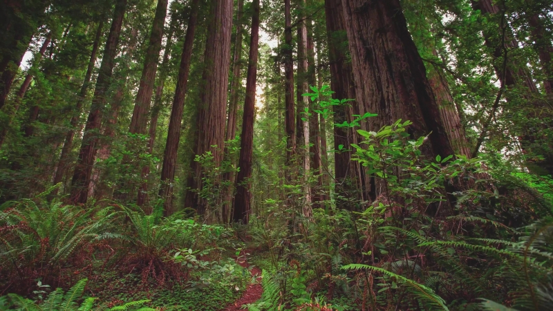 MTJP ¦ Redwood