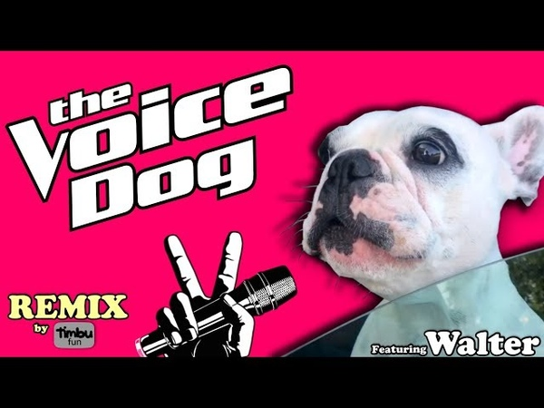 The Voice Dog (Remix) By Timbu Fun - feat. Walter Geoffrey The Frenchie