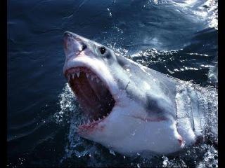 СУПЕР РЫБАЛКА!Во время ловли акулы на нее напала страшная рыба и сожрала!ШОК!!
