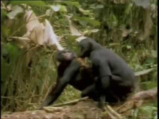 Частная жизнь животных. Самые смешные спаривания