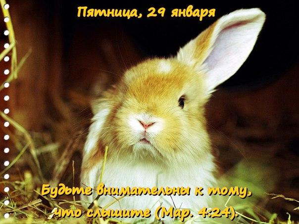 Исследуем Писания каждый день 2016 YiJ9o1bB60c