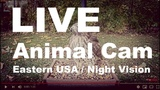 LIVE Animal Cam Under Bird Feeders - Ohio, USA - Bird Watching HQ