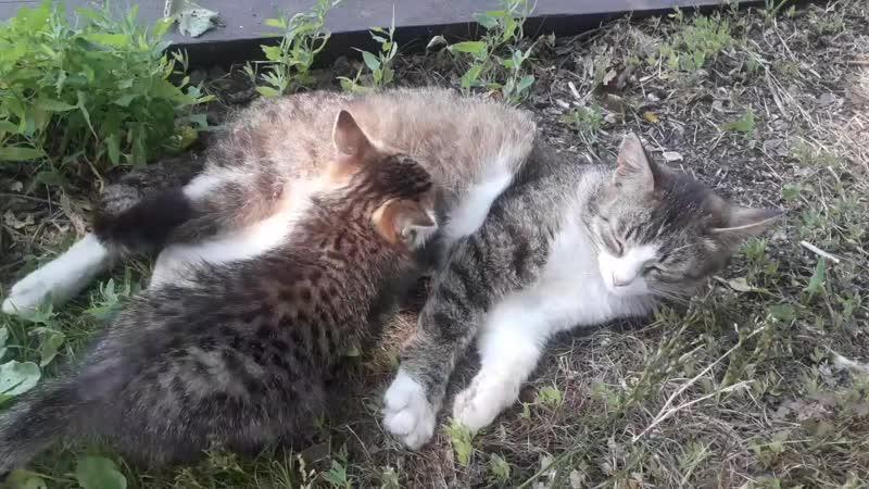 Кошка кормит котёнка. Умиление.