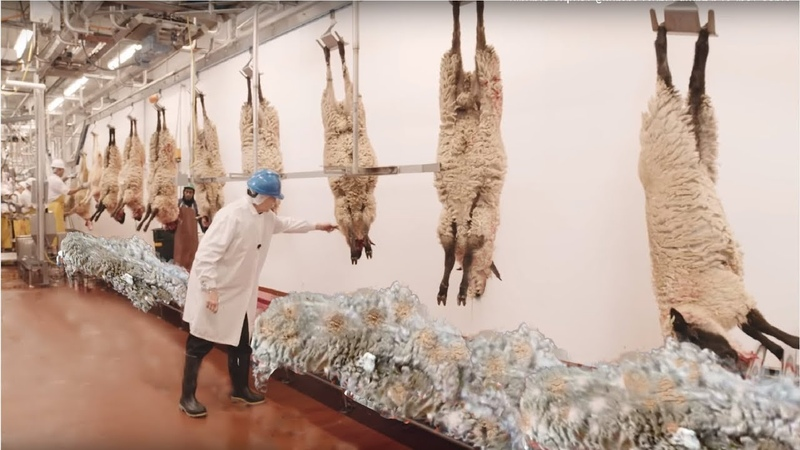 How to Harvesting Wool - Amazing Sheep Factory - Wool Processing Mill