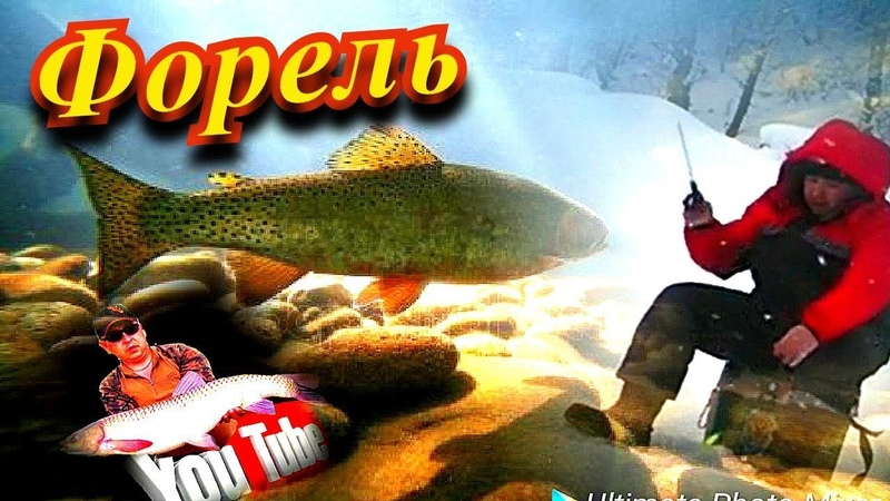 ЛОВЛЯ ФОРЕЛИ ЗИМНЯЯ РЫБАЛКА ВКРАТЦЕ TROUT FISHING