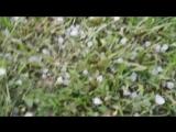 Дача летом. Град и снег. 11 июня 2018 года.