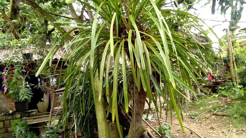10 loài lan rừng giá cực rẻ dành cho người yêu lan-ít tiền