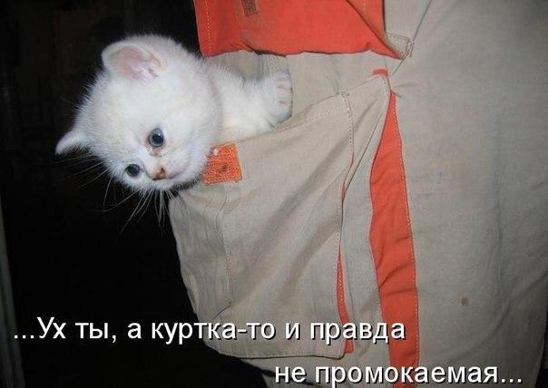 https://pp.vk.me/c635103/v635103906/5742/8fkfoIaHYNU.jpg
