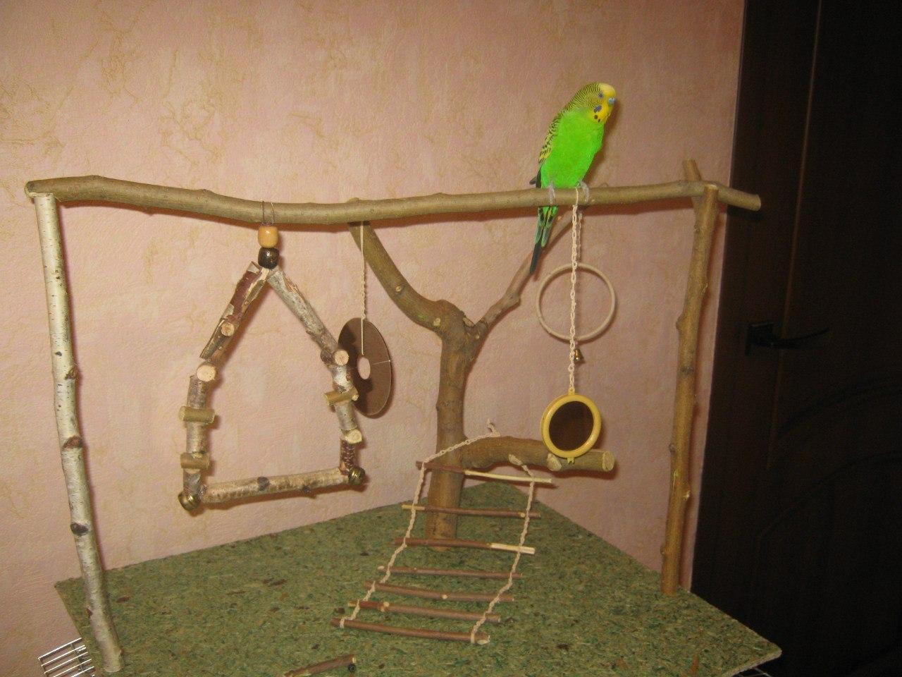 Игровые площадки для попугая своими руками фото