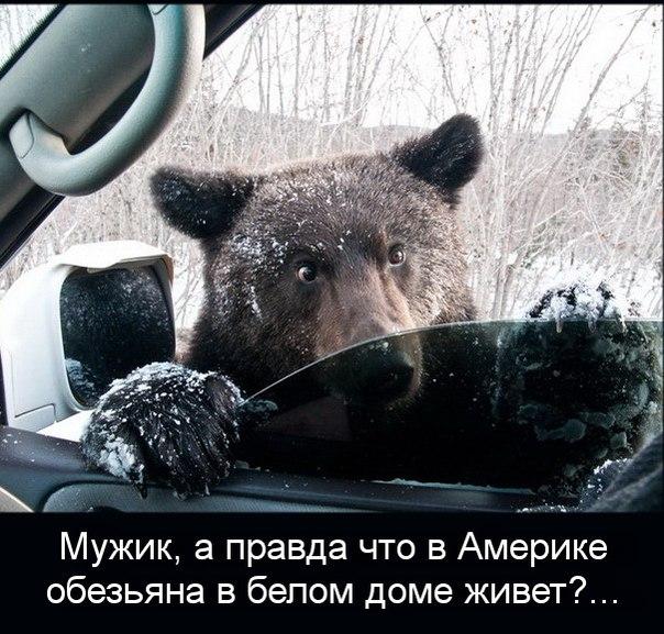 http://cs608424.vk.me/v608424859/3a1a/n2vJBb5AR1c.jpg