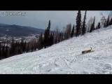 Катание по снежному склону по собачьи )