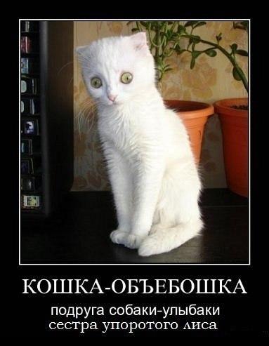http://cs315227.vk.me/v315227063/508e/njf3uHIOWi0.jpg