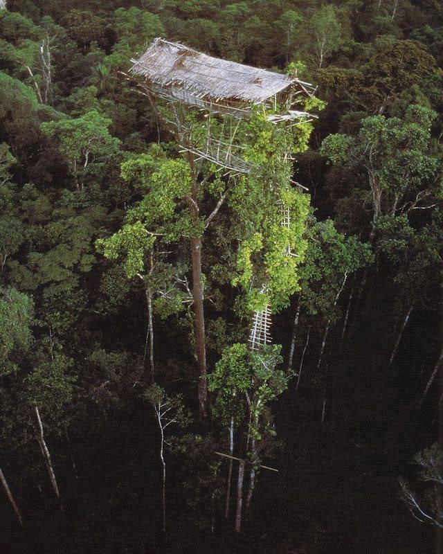 Племя короваи в джунглях Папуа-Новой Гвинеи. Живут в домиках на деревьях.