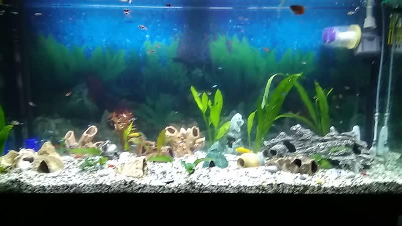 Когда то мой аквариум казался намного больше хотя и обитателей было Гораздо гораздо больше