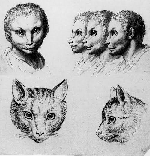 Занимательно о физиогномике. По представлению Аристотеля, все животные связаны с людьми, а люди с богами. Он не только изучал поведенческие особенности и повадки животных, но и приписывал им