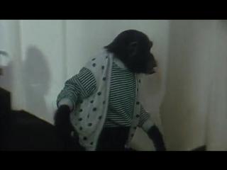 ◄Bingo Bongo(1982)Бинго Бонго*реж.Паскуале Феста Кампаниле
