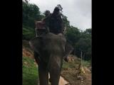 Кевин катается на слоне