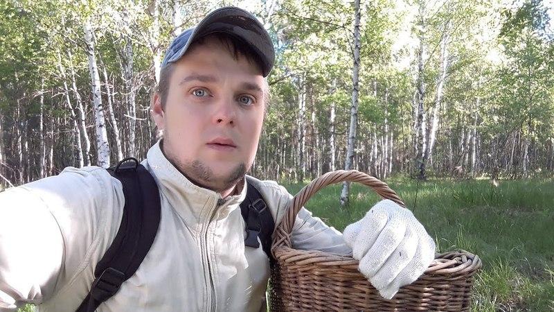 Весенние Грибы отошли - ждем Колосовики! | Цветут ландыши, жужжат комары, поют птички...Лепота!