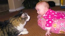 FUNNY CATS AND BABIES PLAYING TOGETHER 4   Funny Babies and Pets
