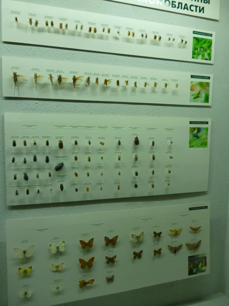 Инсектология (06.11.2014)