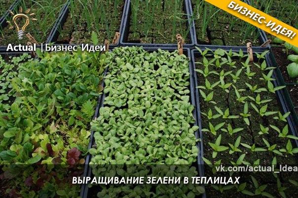 частных домов бизнес план по выращиванию мяты в теплице существует форме восстановления
