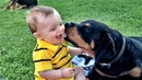 FRIENDLY DOGS AND BABIES PLAYING | Dog loves Baby Compilation