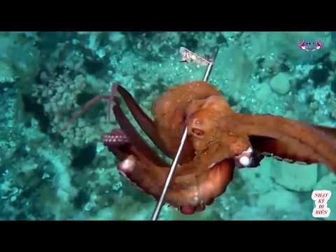 Bắt bạch tuộc dễ nhất quả đất - nhật ký đi biển 20