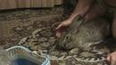 крольчиха не кормит крольчат ч 2