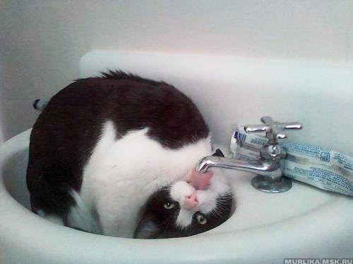 Хочу пить!