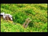 Лада Дэнс - Один раз в год сады цветут