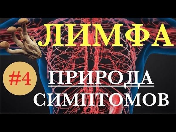 ЛИМФАТИЧЕСКАЯ СИСТЕМА симптомы перегрузки 4