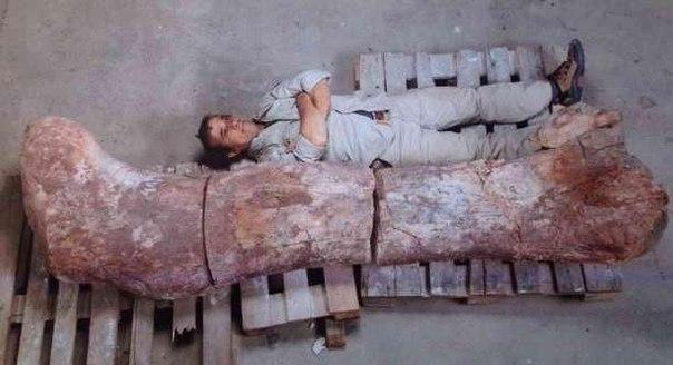 Самый огромный динозавр - титанозавр?