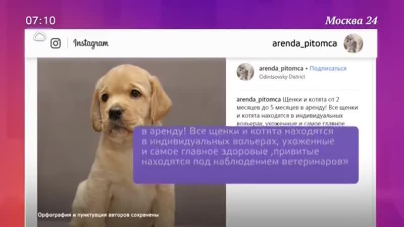 В Москве работает прокат бракованных животных - Москва 24