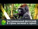 Экстремальный фотограф В стране пигмеев и горилл 2016