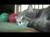 Ролик про сонного кота стал хитом YouTube