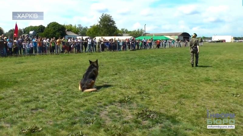 Чотирилапі захисники Вітчизни: на аеродромі Коротич пройде фестиваль за участі службових собак