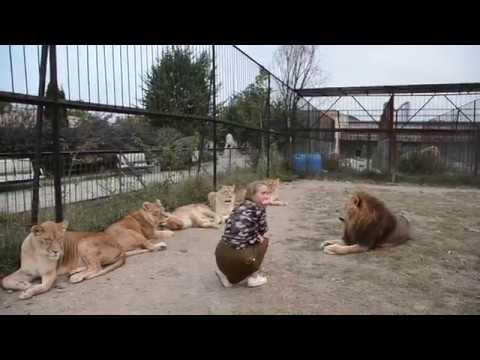 Гарем льва ПЕРСЕЯ