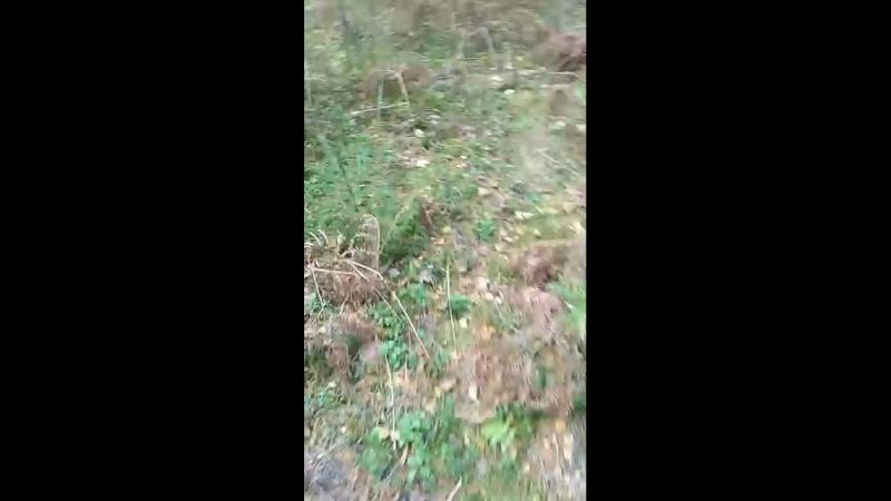 гуляем по лесу, интересные находки и.. и грибы