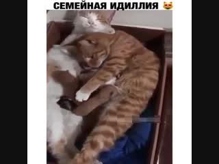 Даже котики могут создать уют!!!